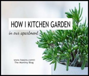 How I Kitchen Garden In Our Apartment