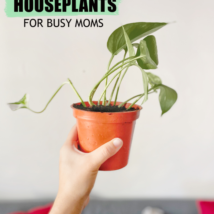 6 No-Fuss Houseplants for Busy Moms
